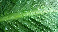 List po dešti