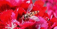 Zase nejaká včela..