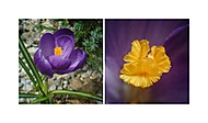 Dva pohledy na květinu