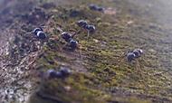 Mravenečci na stromě