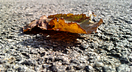 Střípky podzimu