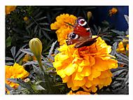 Podzimní  poslední motýlková