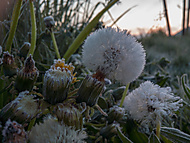 Jarný mráz - Ligthroom