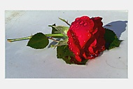 Růžička...