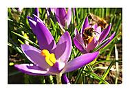 Jarní pozdravy
