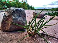 Kámen a tráva