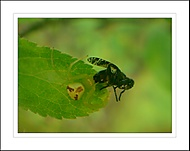 pavuk chytil muchu :)