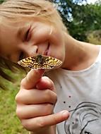 Motýl ..