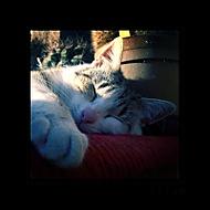 Kočičí sen