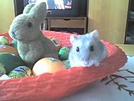 Velikonoce jak vyšitý :)