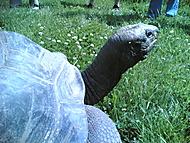 Želva, velká
