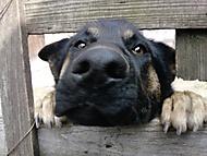 smutné psie oči.))
