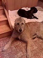 muj pes :)