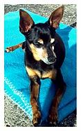 Můj pes Sisinka