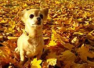 Barvy podzimu, jako padlé listí