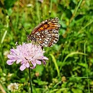 Motýl.