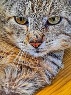 Toulavá kočka 🐱