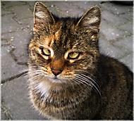 Trochu šilhavá kočka