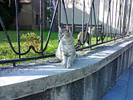 2 kočky ve městě