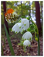 Nádhery jara... (soni) – Nokia N73