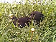 moj pes Blacky