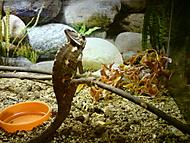 Chameleon (roupec2) – Sony Ericsson C702