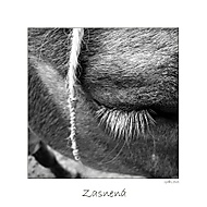 Zasnená.. (gallows) - Sony Ericsson K810i