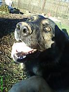 Můj pes