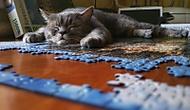 Puzzle maniak Tobík