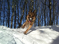 radovanky ve snehu