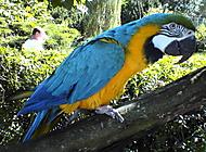 Papoušek v zologické zahradě Dvůr Králové nad Labem.