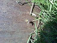 žluto černej pavouk
