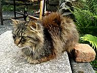 Kočka nebo kocour?