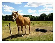 Zlatý koník