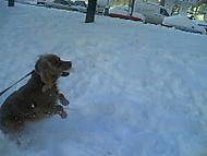 Zimní radovánky (4)