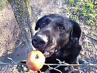Pes za plotem