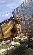 Blodhound - 14 měsíců