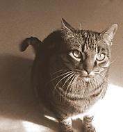 Mourek kocour kočka hero htc