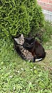 Divoké kočky