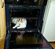 Kočka v troubě.