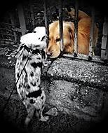 Láska mezi plotem