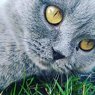 Kočka 2016 s úpravou