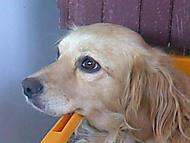 Môj pes Lea