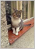 Cat again :)