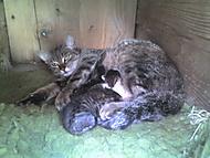 Kočka s koťaty v boudě