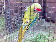 Papoušek v Zoo