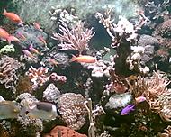 podmorsky svet zoo olomouc