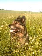 Asi se mu v té trávě sedí dobře.. :-D