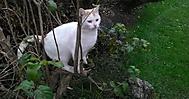 Kočka na keři