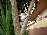 Krétské kotě